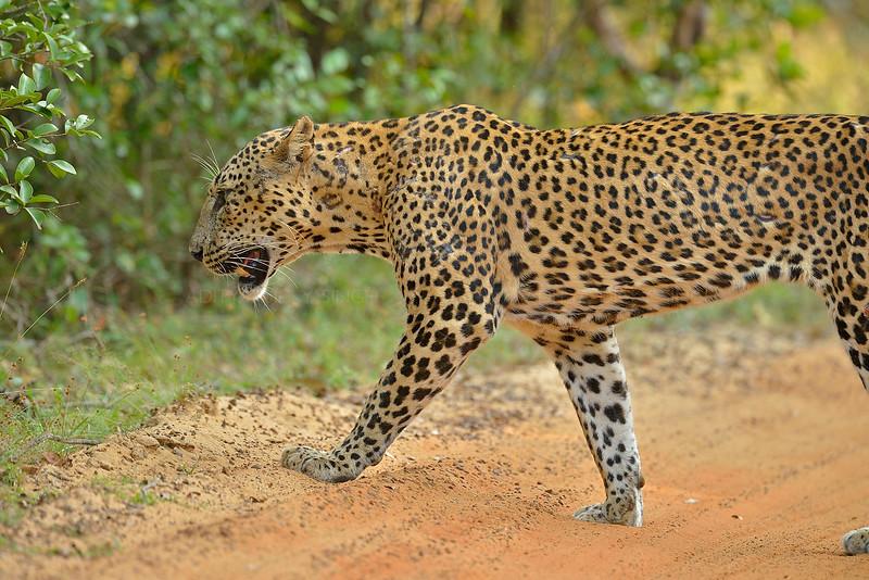 ADS_Sri Lanka_000052594
