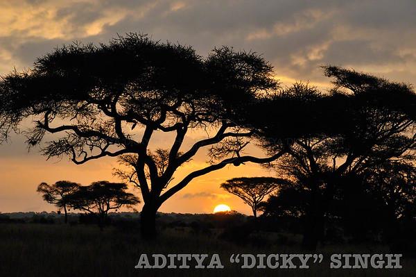 africa, sunrise, safari, tree