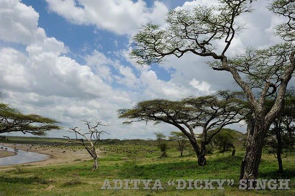 ndutu, landscapes, safari, africa