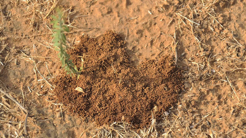 Ground Termites Summers