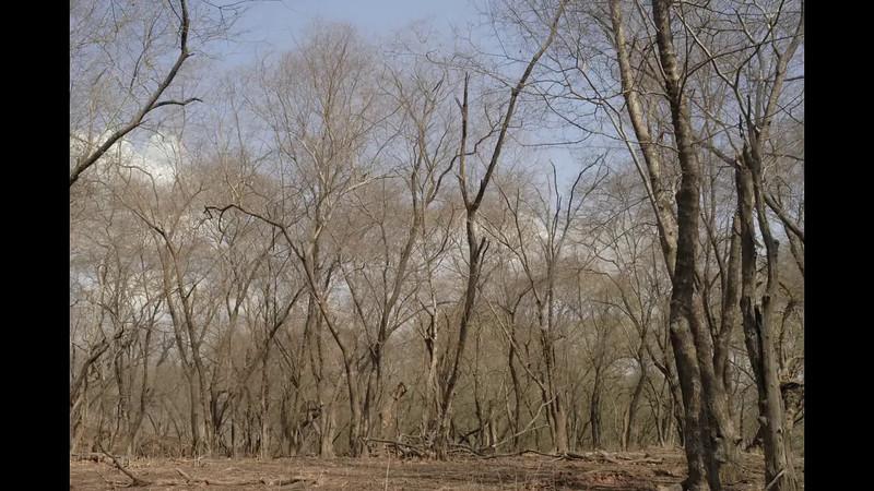Dhok Forest-desktop