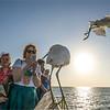 Naples Beach - una garzetta si lascia fotografare dai turisti