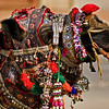 Head shot of a decorated camel in Pushkar in India