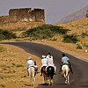 Horse riders in rural Rajasthan in front of an ancient ruin