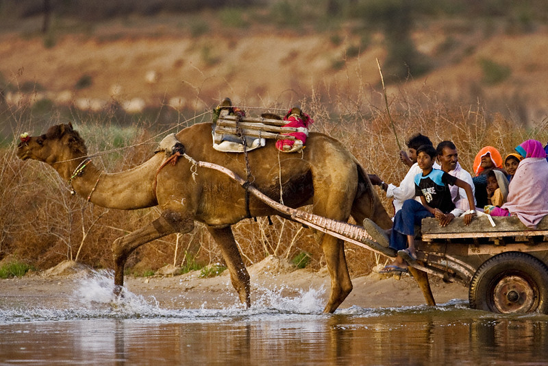 People on a Camel cart crossing a river in Rajasthan