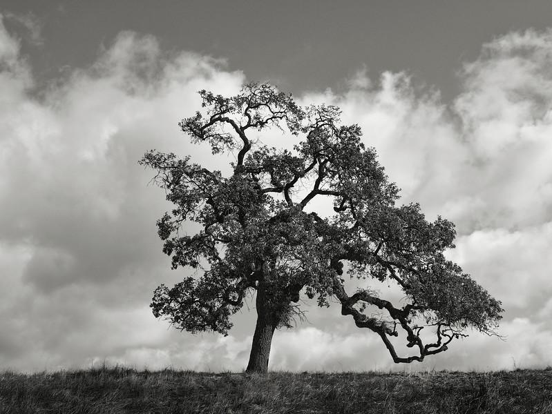 Tree along Arrowhead Trail