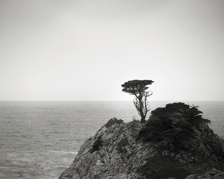 Lone Cypress at Point Lobos