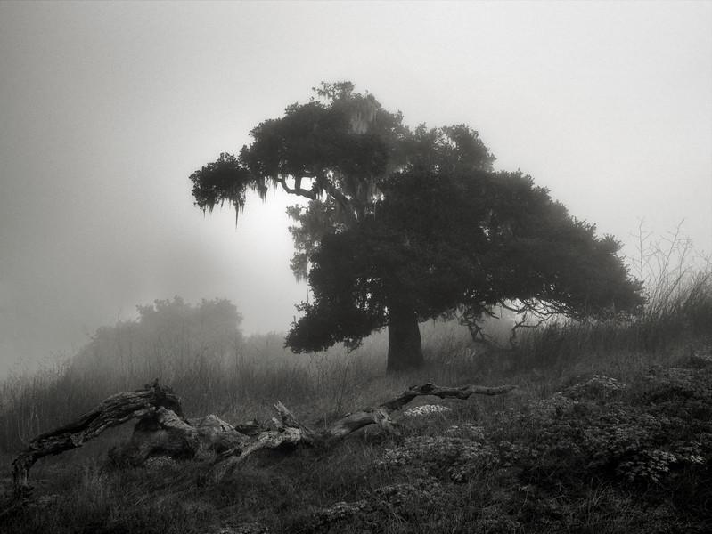 Morning Haze at Pismo Preserve