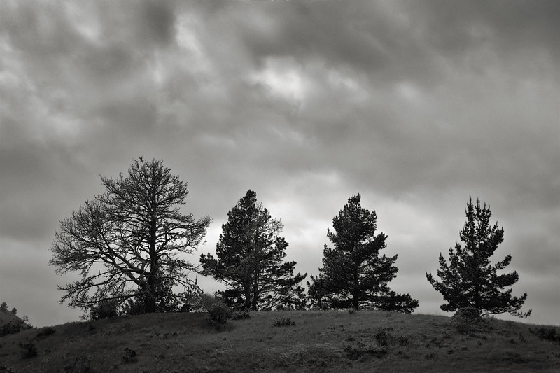 Four Trees at Inspiration Point