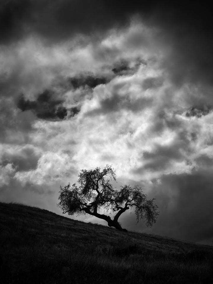 Tree Elder