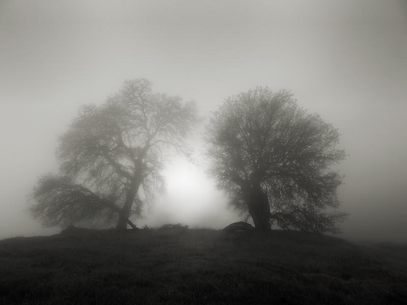 Fog Portal