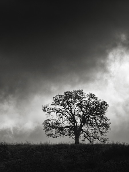 Tree along Figueroa Trail