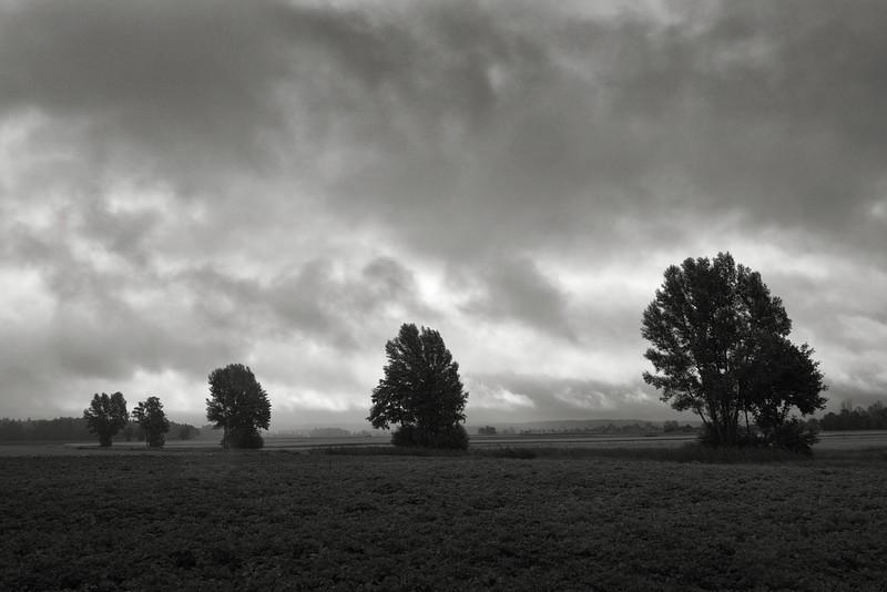 Eine Reihe von fünf Bäumen
