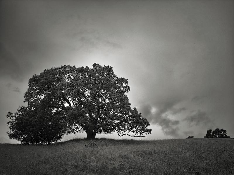 Mine Trail Tree
