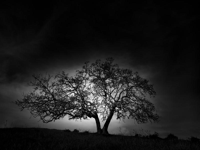 Stile Tree