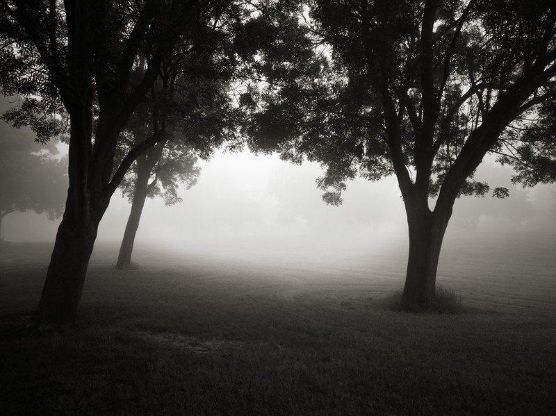 Trees in Haze at Dawn