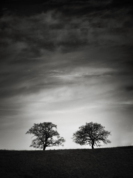 Two Trees at Almaden Quicksilver