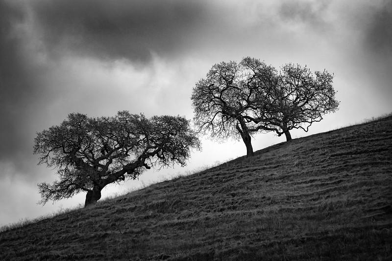Three Tress on a Hill