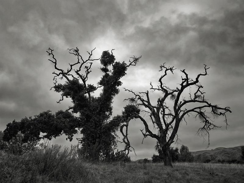 Odd Tree Pair
