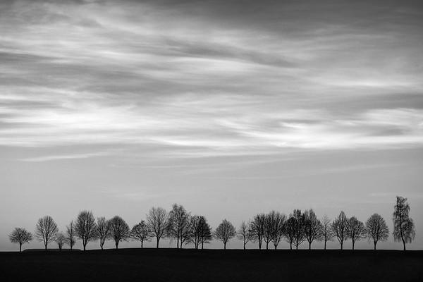 Baumreihe im Morgengrauen