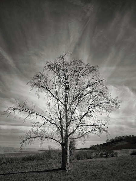 Bayview Trail Tree