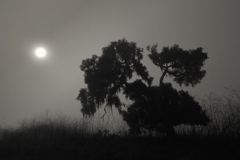 A Tree and the Sun in the Fog