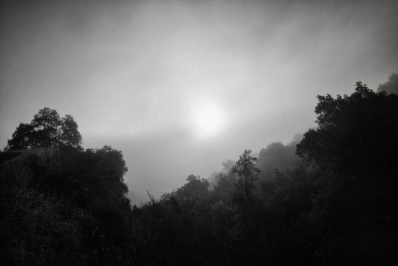 Morning Mist at Almaden Quicksilver