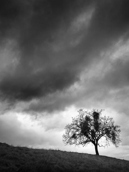 Mockingbird Tree