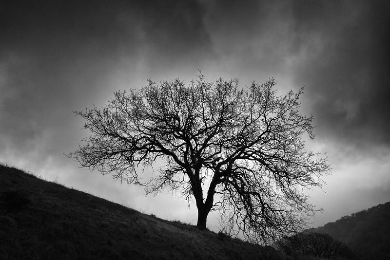 Camp Trail Tree