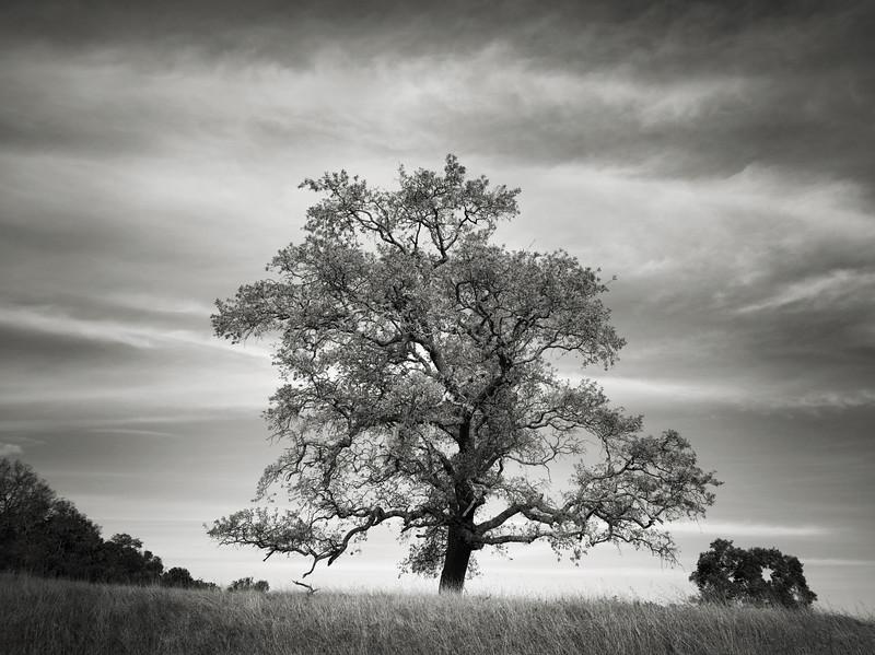 Hacienda Trail Tree