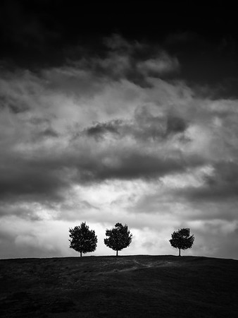 Three Trees after the Storm