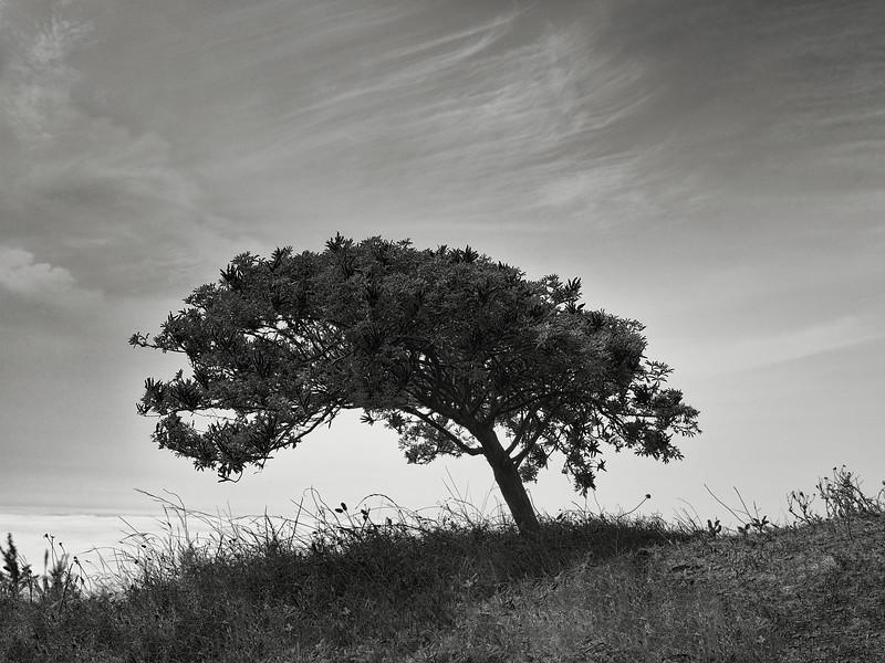 Panorama Trail Tree
