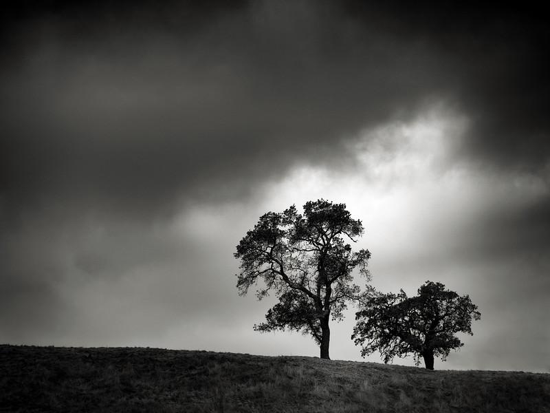 Coyote Tree Pair