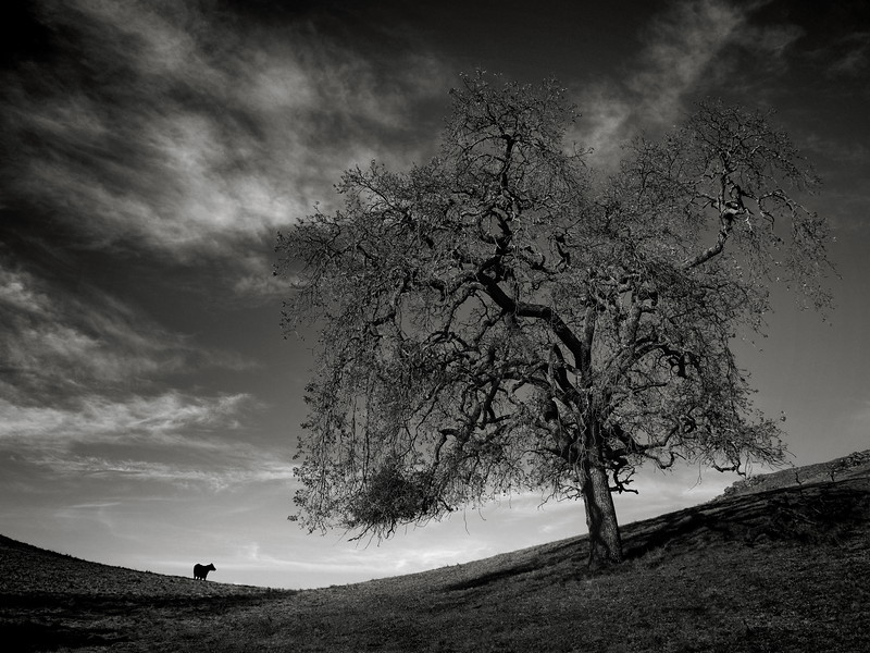 A Tree and a Cow