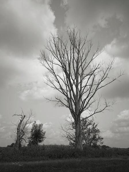 Ein Baum an der Wörntiz