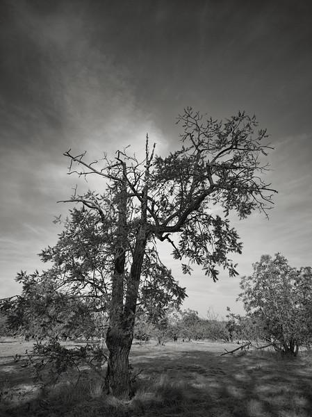 The V-Tree