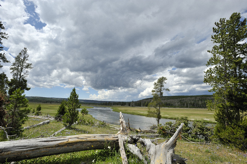 Fallen tree in the Glacier basin in Yellowstone national park, USA