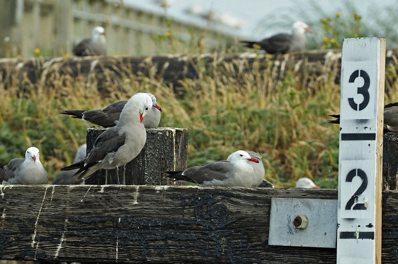 Gulls on the docks in Port Townsend, Washington, USA