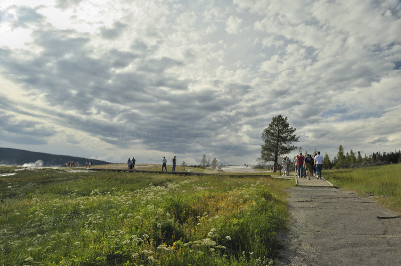 Visitors in the summers in Yellowstone national park