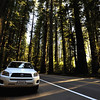 Car parked in the coastal Redwood forests of north California, USA