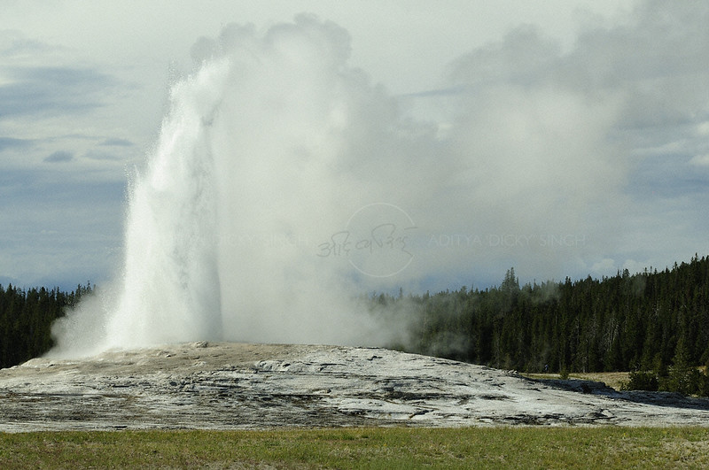 Old Faithful geyser in action in yellowstone national park, Wyoming, USA