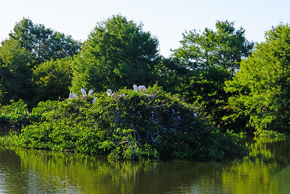 Woodstork Nests