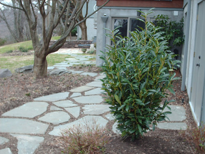 Irregular fieldstone walkway and patio