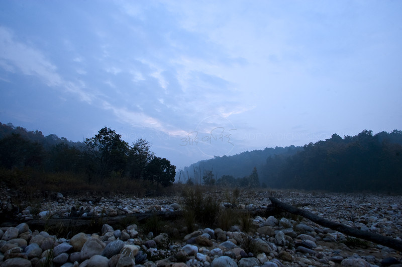 Forests silhouetted in blue light at dawn in Corbett