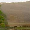 Wide shot of a tiger walking across a lake in Ranthambhore