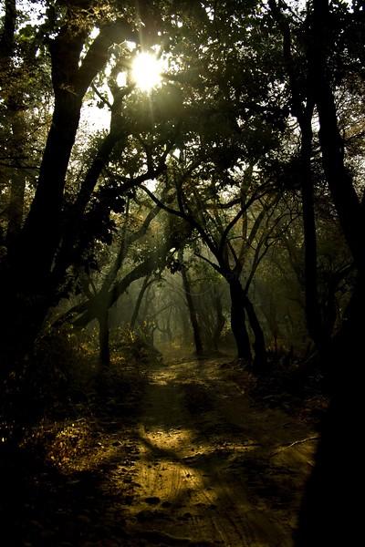 Jungles of Ranthambhore at dawn