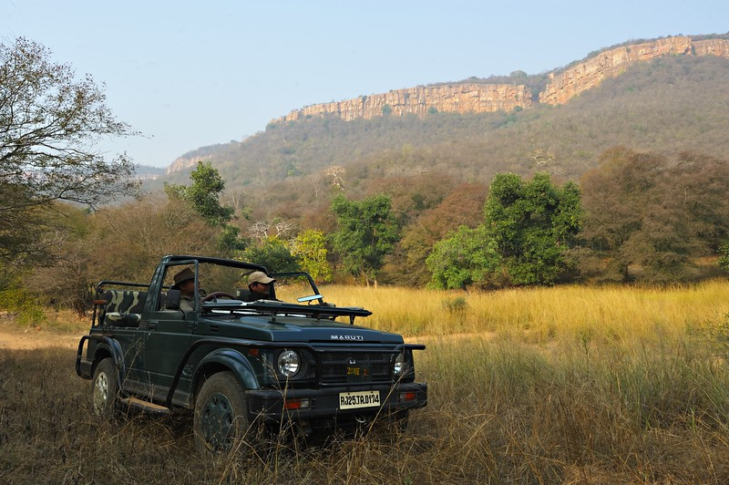 Safari in a four wheel drive car in the forests of Ranthambhore at dawn in winters