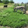 Enjoying the Different Pasture.
