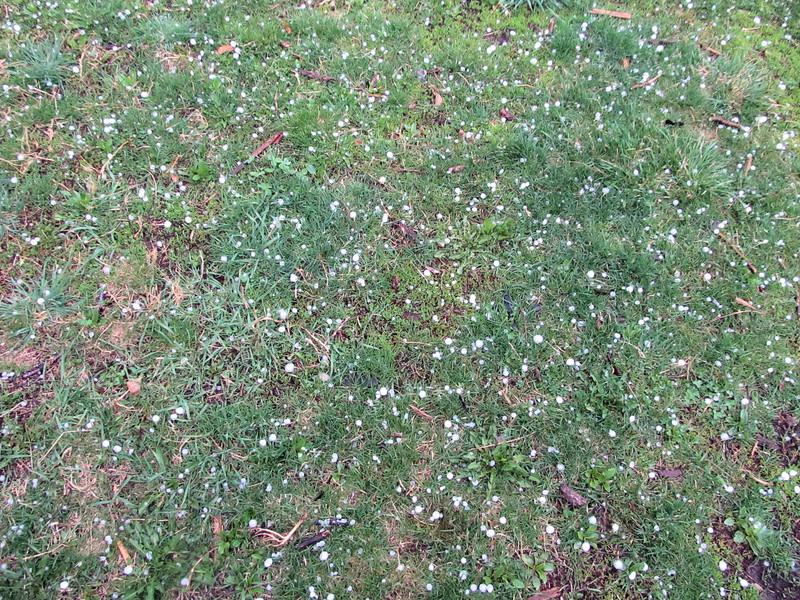 Hail on the Green Grass