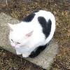 Friendly Little Kitten With a Black Heart.